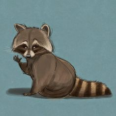 Drawn racoon animated #drawing #sketch raccoon! Blog/Website Not