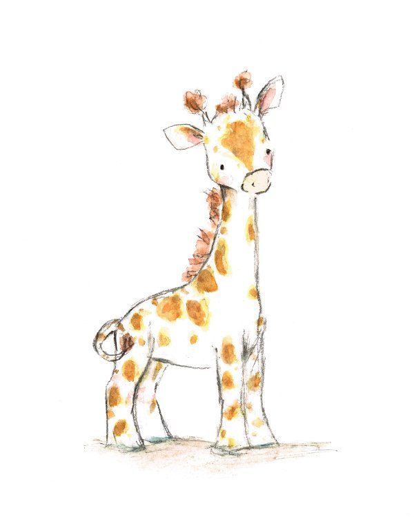 Drawn racoon baby giraffe Images 52 baby Pinterest on