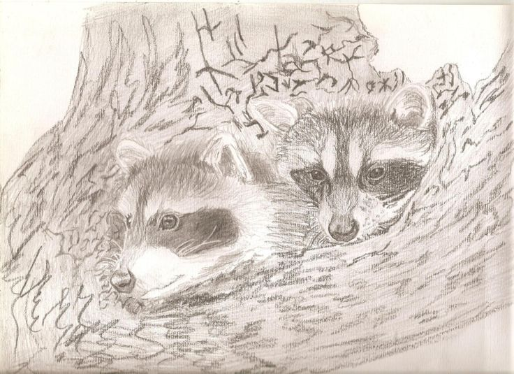 Drawn racoon baby raccoon RACCOONS images on more 275