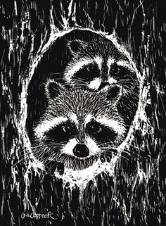 Drawn racoon baby raccoon By  on more Pencil