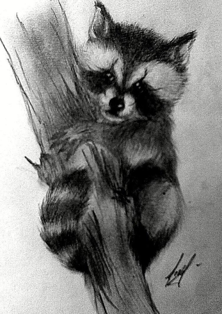Drawn racoon baby raccoon Raccoon baby on deikochan by