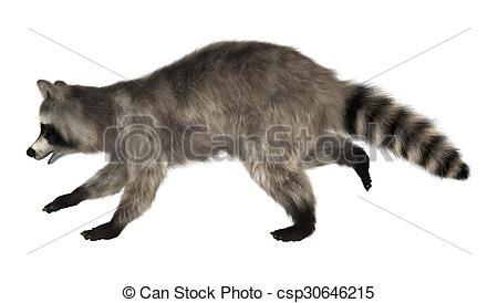 Drawn racoon clipart Art raccoon #15 Raccoon #12