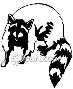 Drawn racoon clipart Clipart And Black Clipart Panda