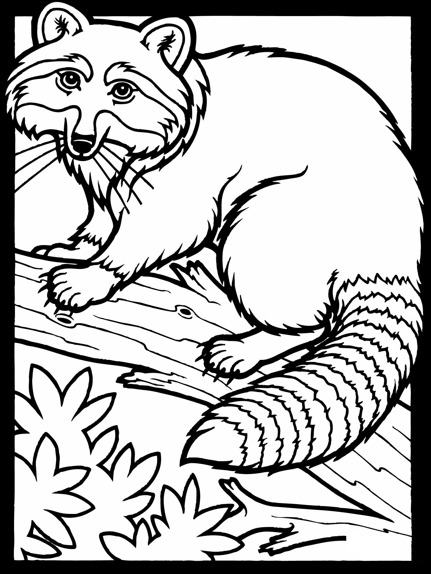 Drawn racoon color Pages Free Raccoon Coloring Free