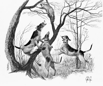 Drawn racoon coon hunting Images about Coon Coon Pinterest