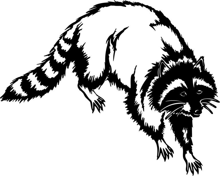 Drawn racoon coon hunting Images 2 Free Raccoon Pictures