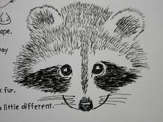 Drawn racoon draw a Simple Face Lesson Raccoon