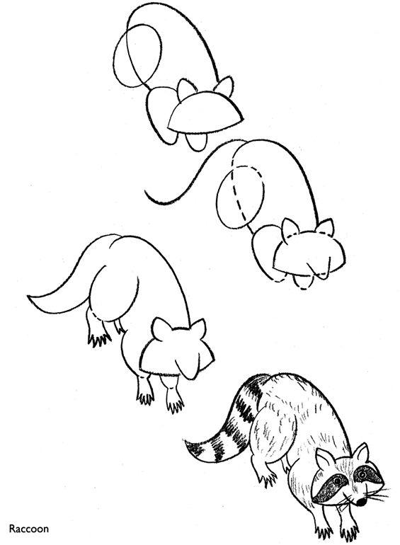 Drawn racoon easy Un Art  Animals raton