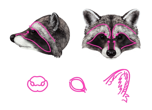 Drawn racoon face Head Red How Animals: to