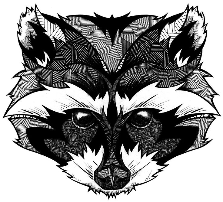 Drawn racoon face Pinterest Find on this more