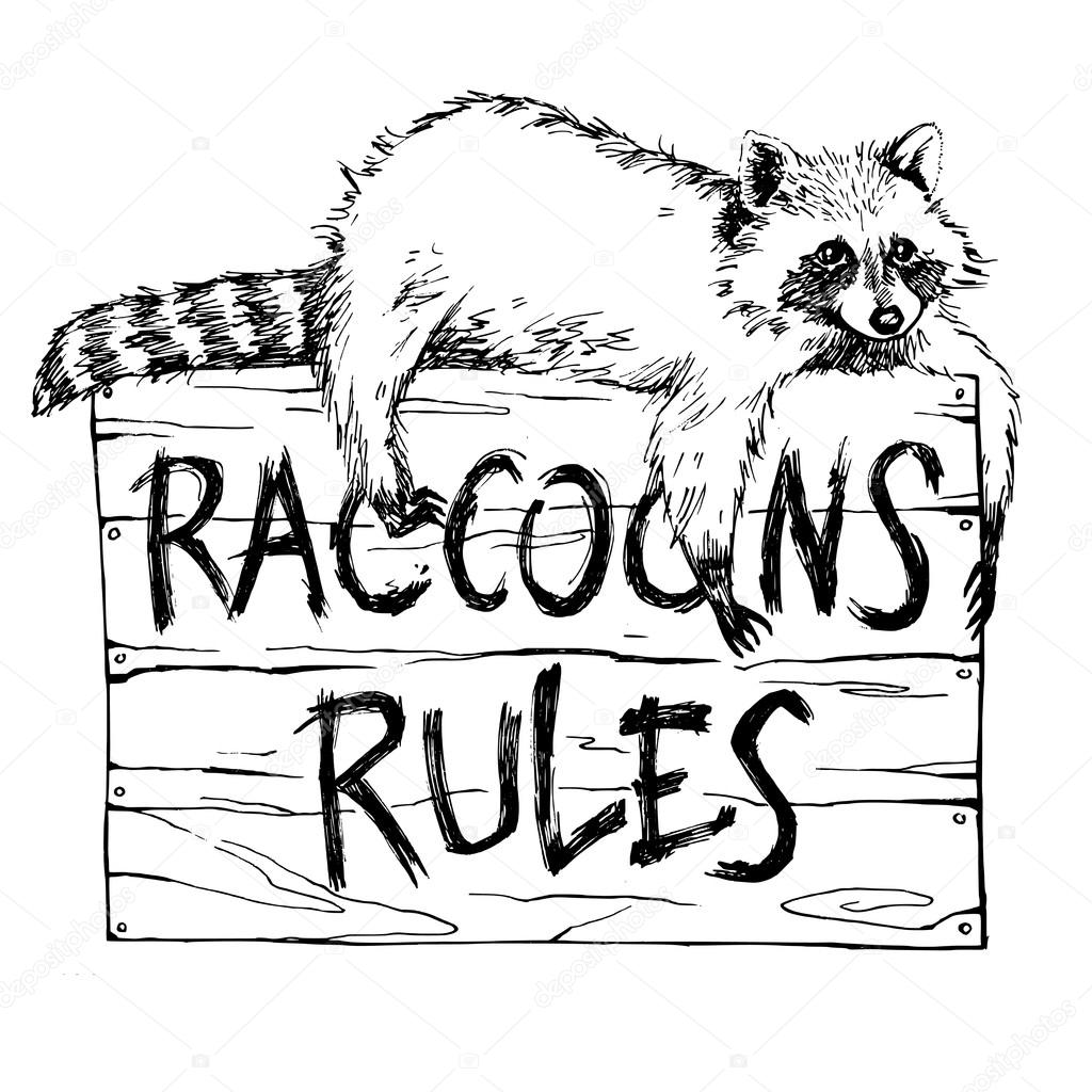 Drawn racoon funny Raccoons hand touching raccoons and