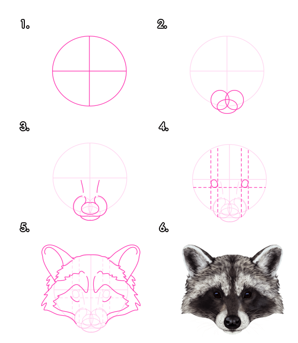 Drawn raccoon face How Pandas and Red Draw