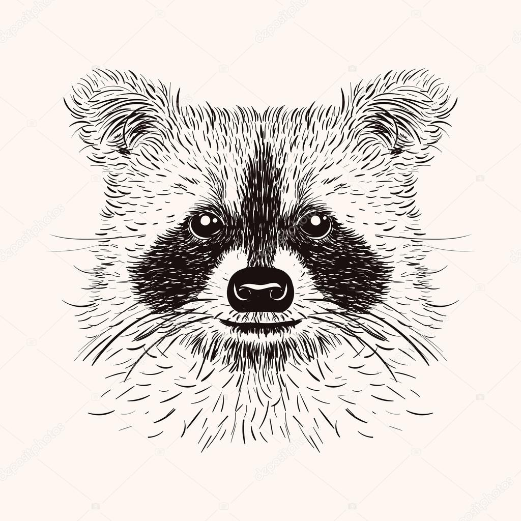 Drawn racoon head Liner Stock liner Sketch illustration