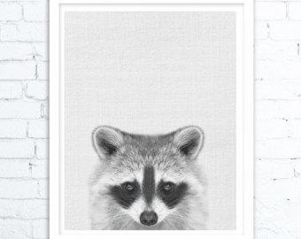 Drawn racoon little Nursery Racoon Art Animal Print