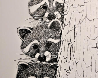 Drawn raccoon pen and ink Tree Quality Drawing drawing Raccoons