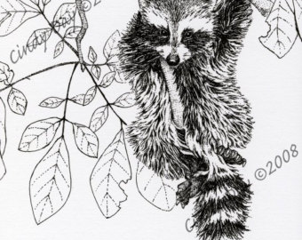 Drawn raccoon pen and ink Acrobat
