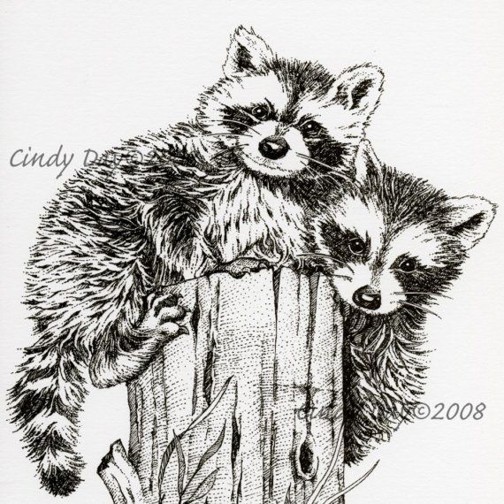 Drawn racoon pen and ink Racoon and and best Ink