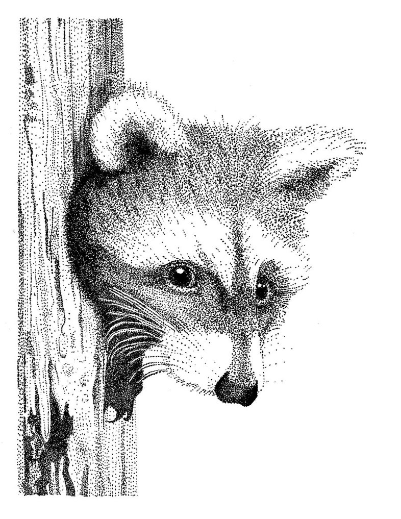 Drawn racoon pen and ink Stippling is by All Goldencloud