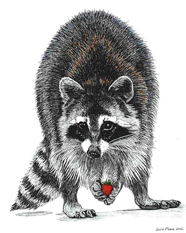 Drawn raccoon pen and ink Racoon Moore PenPets Leslie