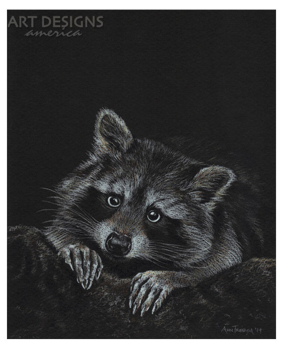 Drawn racoon pencil By Drawings 8 Drawing Wildlife