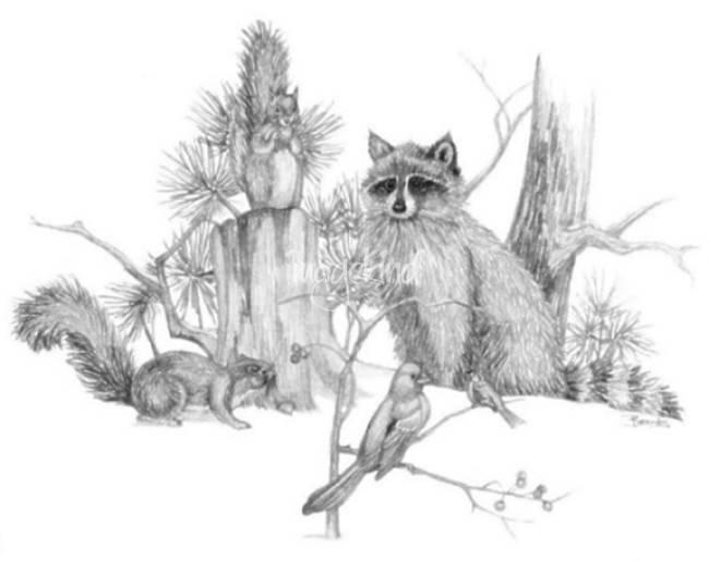 "Drawn raccoon pencil By Sale 1999 Friends"" BrandyHouse"
