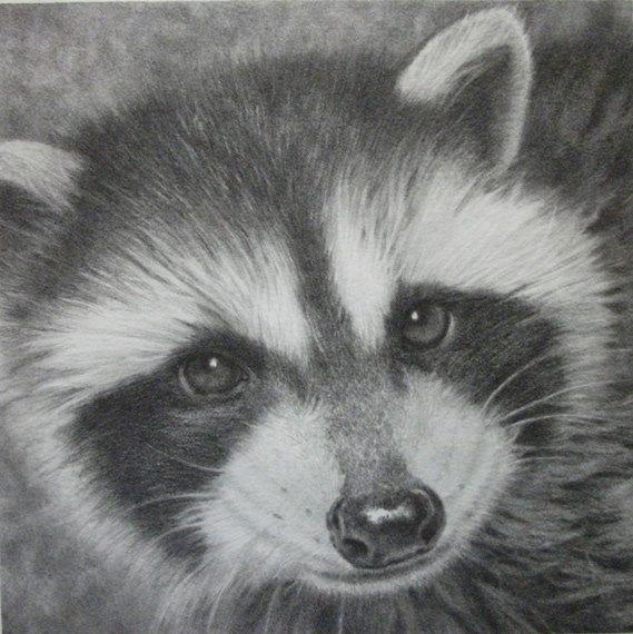 Drawn racoon pencil Portrait Pencil / / Original