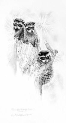 Drawn raccoon pencil Of disguise by on drawings