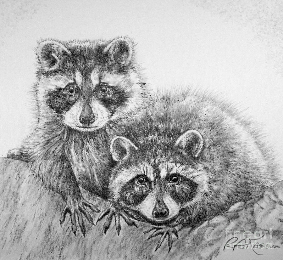 Drawn racoon pencil Kaelin Raccoon Roy Anthony Anthony