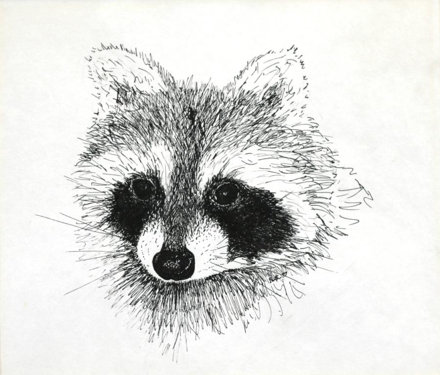 Drawn racoon racoon Raccoon raccoon Artwork Ruth's Mr