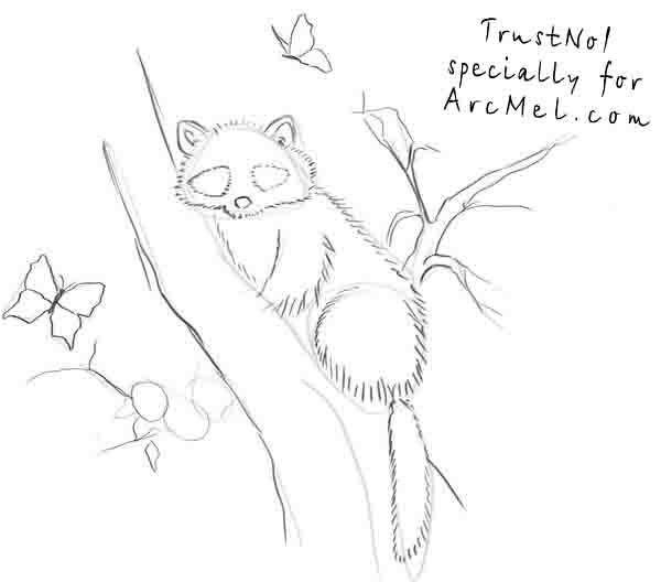 Drawn racoon racoon How Raccoon Raccoon A By