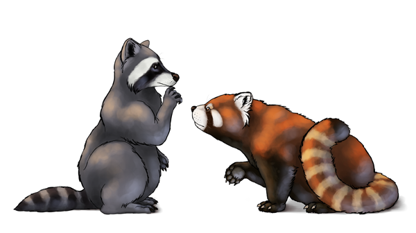 Drawn red panda really Draw How image Final Animals: