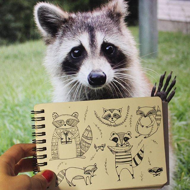 Drawn racoon racoon Good everyone on Raccoon