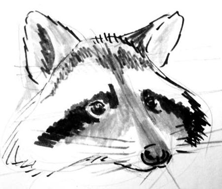 Drawn racoon racoon Portrait raccoon a of How
