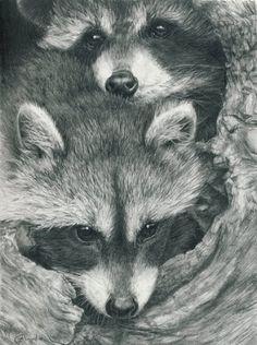 Drawn racoon realistic Pinterest