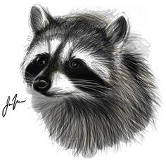 Drawn racoon realistic ~Maiwenn  by on Raccoon