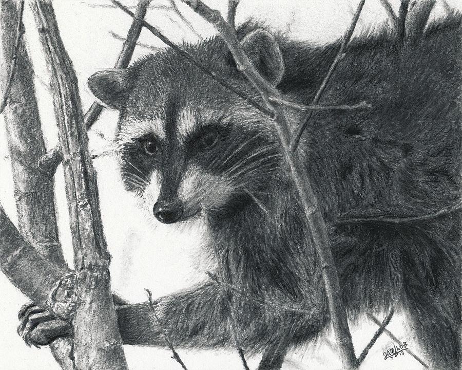 Drawn raccoon realistic Joshua Charcoal Animal Drawing Raccoon