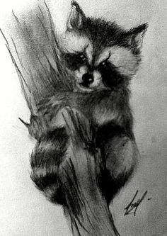 Drawn racoon realistic On ~Maiwenn Search Pinterest