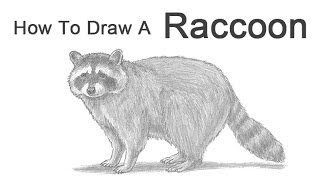 Drawn racoon realistic Draw to Art Pictures How