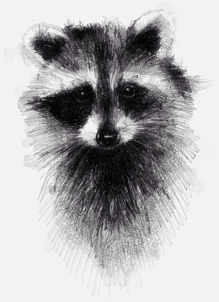 Drawn raccoon racoon A One best drawings my