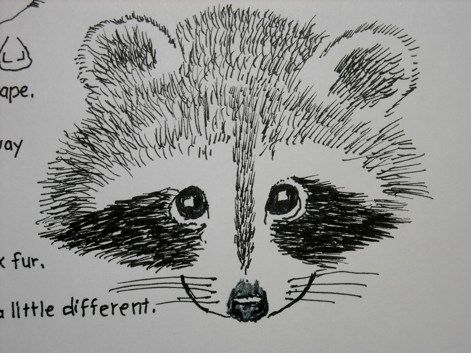 Drawn racoon simple Drawing Face Raccoon  racoons