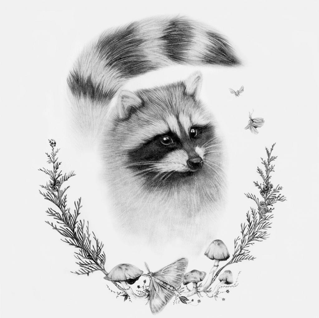 Drawn racoon simple Paintings On Raccoons Drawings Art