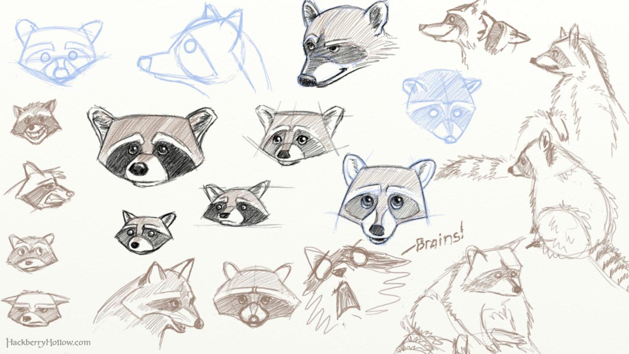 Drawn raccoon sketch Raccoon To Wedrawanimals Draw A