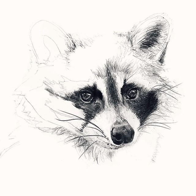 Drawn raccoon sketch Drawing Portrait Portrait #raccoon 7