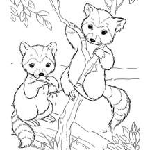 Drawn racoon tree drawing Raccoon Tree Coloring NetArt Climbing