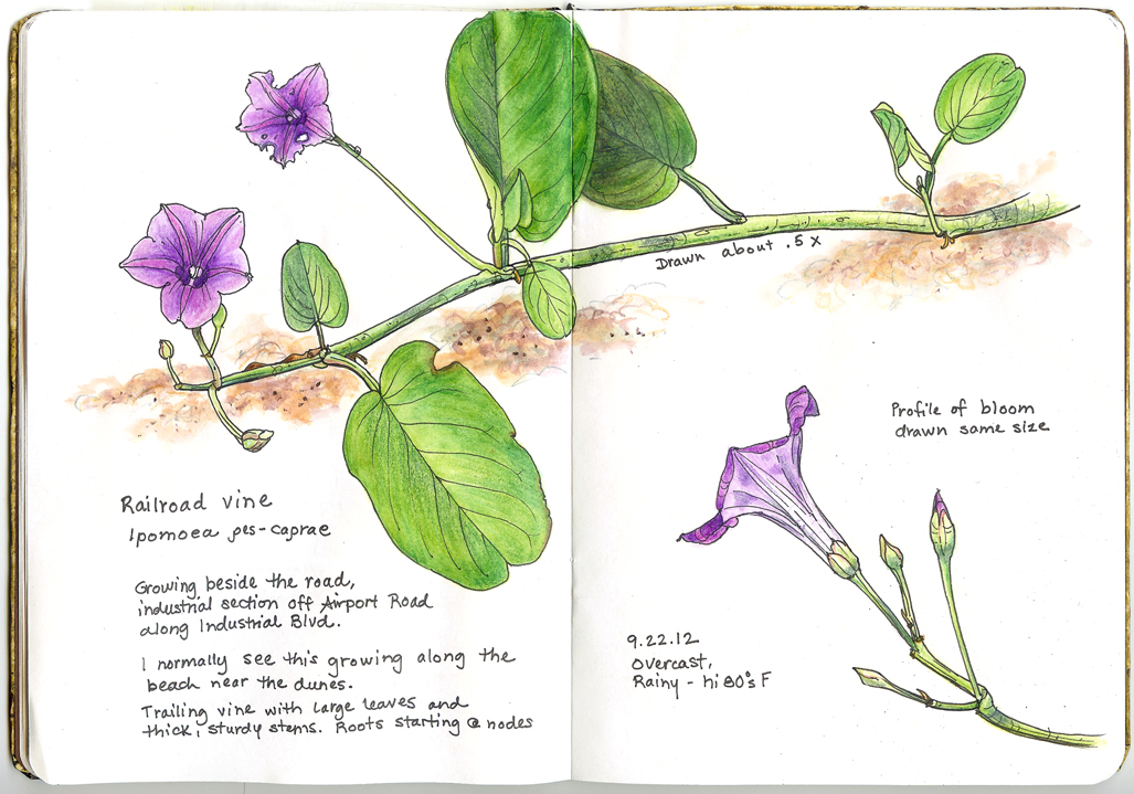 Drawn railroad vine Florida: vine Railroad Southwest vine