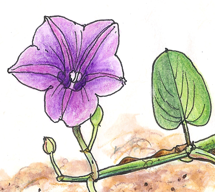 Drawn railroad vine Southwest can blooms show! tools