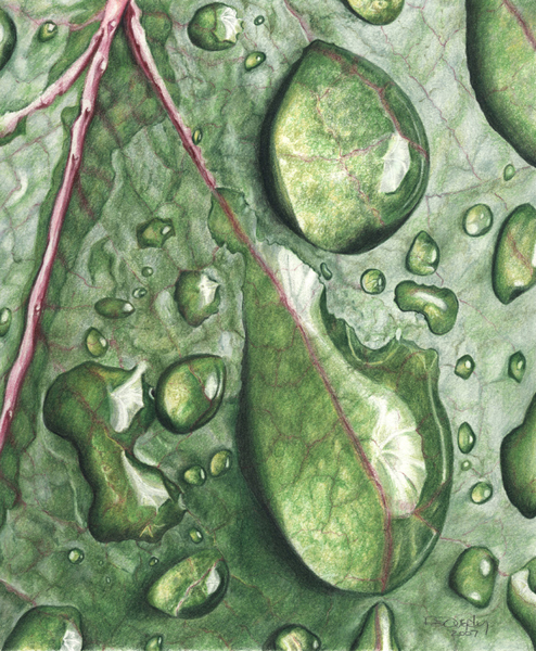 Drawn raindrops color Pencil Overly's Pencil Colored and