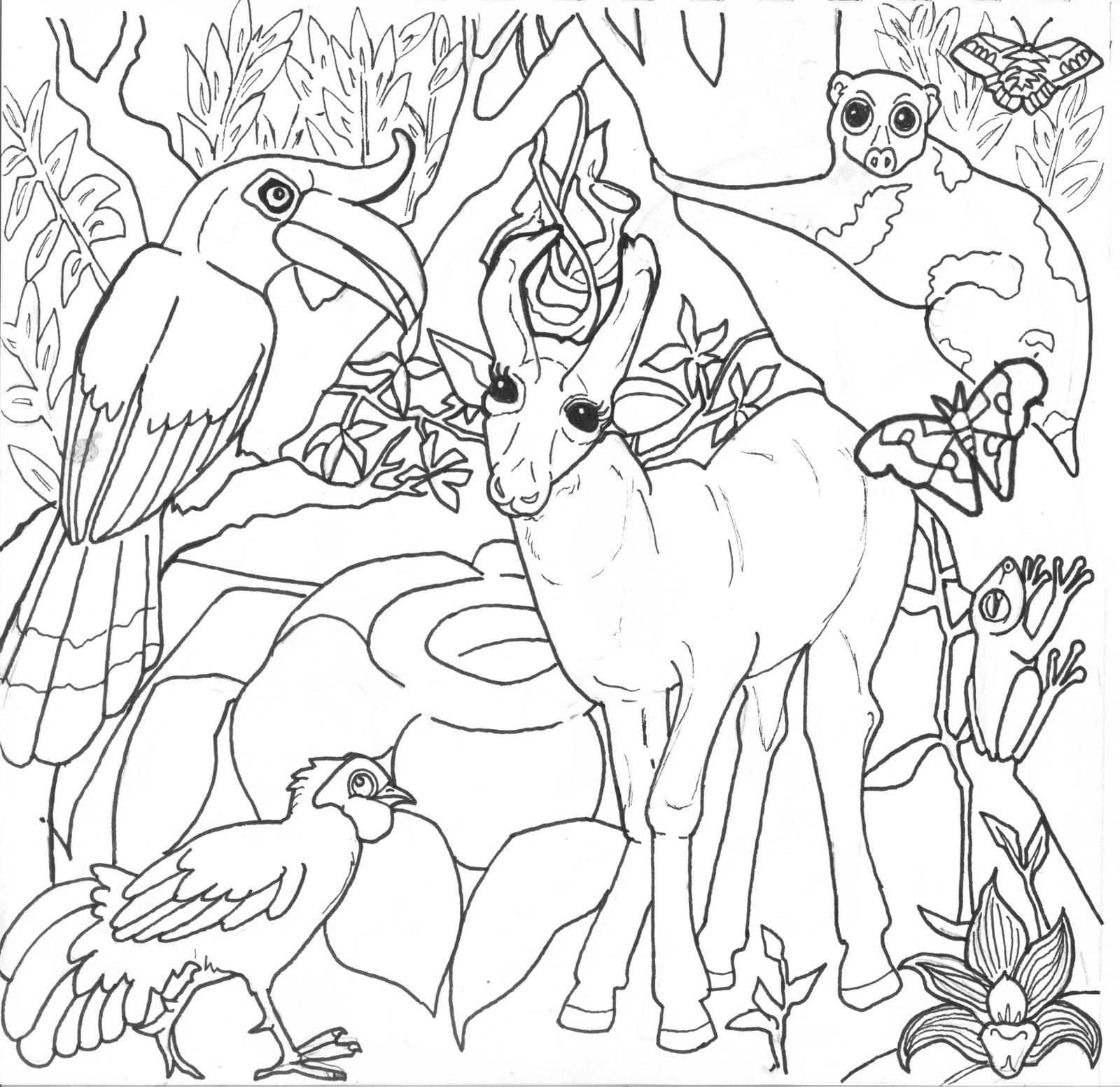 Drawn rainforest Rainforest coloring Download Download Rainforest