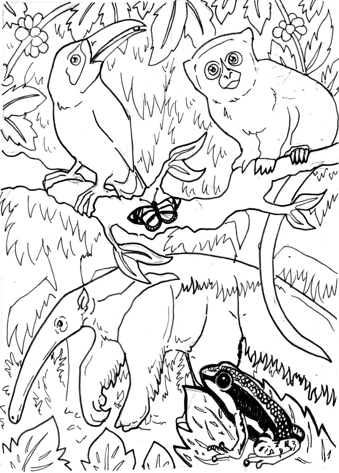 Drawn rainforest Colouring Pages The LemurKat: The