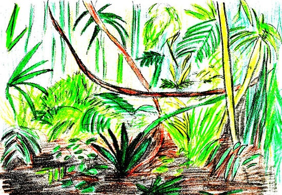 Drawn rainforest (with a pictures) a Mural